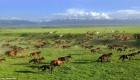 عکسهای شگفت انگیز از اسب های وحشی