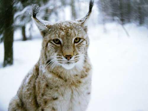 تصاویری از حیوانات حیات وحش در طبیعت