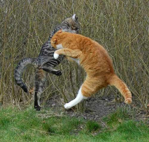 عکسهای دیدنی از گربه های نینجا