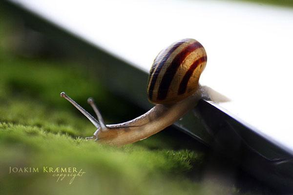 عکسهای حلزون در طبیعت