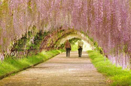 عکسهای زیبا از شگفتیهای بهار در ژاپن