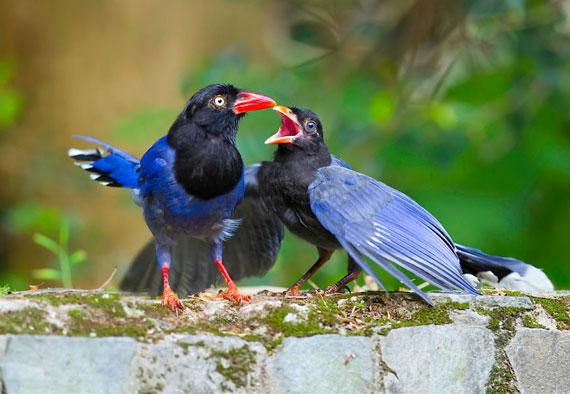 عکسهای پرندگان زیبا در فصل بهار