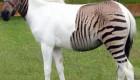 عکسهای جالب از حیوانات دورگه