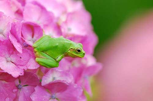 عکسهای زیبا از بامزه ترین قورباغه در طبیعت