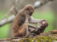گوشمالی دادن فرزند به روش میمون (تصاویر)