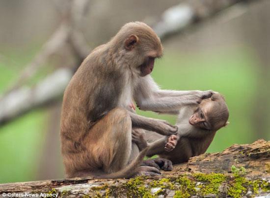 گوشمالی دادن فرزند به روش میمون