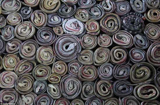 تولید لباس از کوره های مارپزی (عکس)