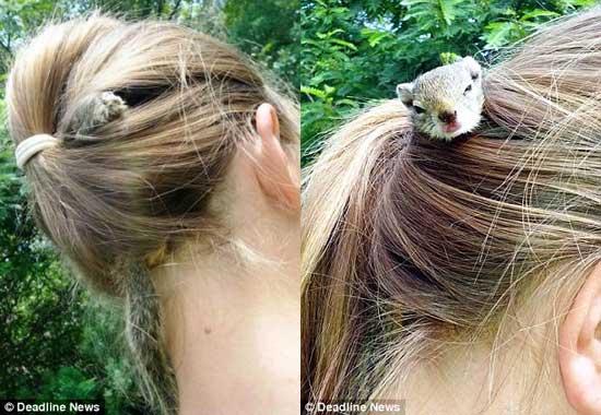 در میان موهای این دختر یک موش صحرایی زندگی می کند
