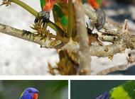 عکس های پرندگان خوش آب و رنگ و زیبا