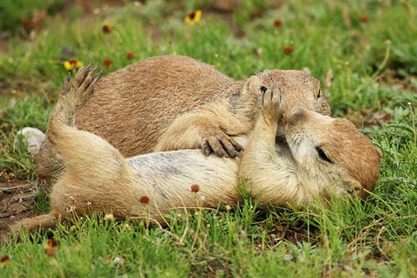 عکس های عاشقانه از بوسه های حیوانات و پرندگان