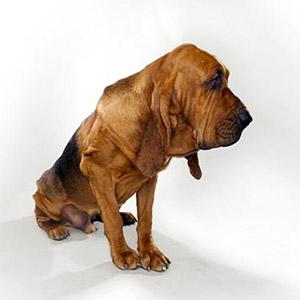 عکس هایی از باهوش ترین نژاد سگ ها