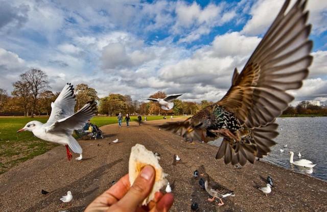 عکاسی حرفه ای و شگفت انگیز از پرندگان