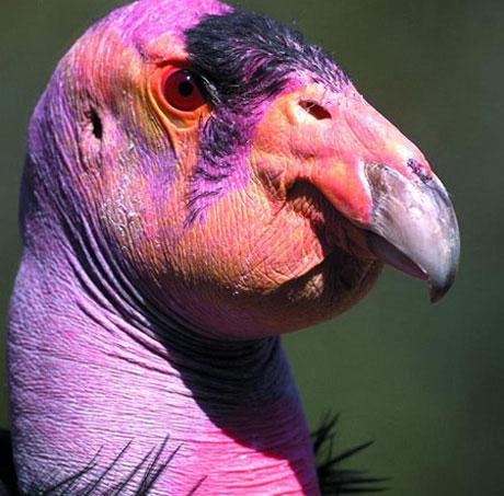 تصاویر پرندگان زیبا و خوش آب و رنگ - قسمت دوم