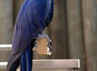تصاویر پرندگان زیبا و خوش آب و رنگ – قسمت دوم