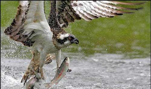 عکسهای دیدنی از دنیای پرندگان و حیوانات
