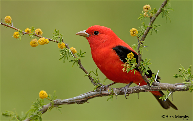 گرانترین پرنده ها در سراسر دنیا + عکس