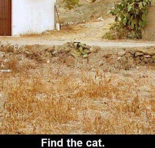عکس های بسیار خنده دار از نوشته های طنز