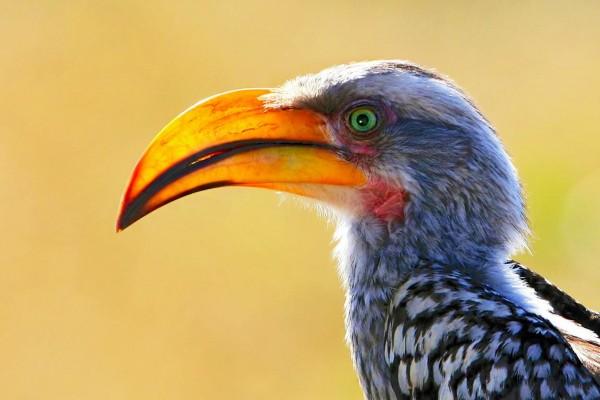 عکسهای پرندگان زیبا و وحشی