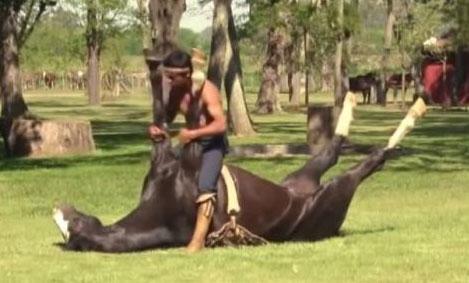 اسبی جالب که ورزش یوگا کار می کند (عکس)