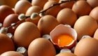 چرا مصرف تخم مرغ در وعدههای غذایی انسانها اهمیت دارد؟