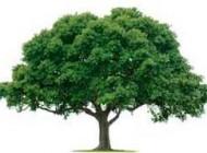 داستان زیبای درخت جاودانگی