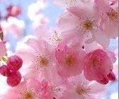 روش باغبانی در بهار