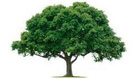 داستان خواندنی درخت