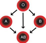 رابطه جالب گروه خونی و تفاوت های اخلاقی