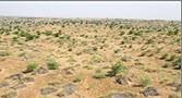 اجرای طرح جالب بیابان زدایی در چند استان