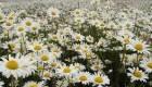 درمانهای موثر گیاهی و خانگی