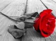 داستان گل قرمز