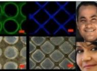 شاهکار ایرانی ها در  تولید بافت انسانی قلب مصنوعی