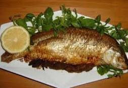 همه چیز درباره ماهی