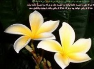 چند حدیث کوتاه از امام حسین (ع)
