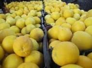 خواص بینظیر و شگفت انگیز لیمو شیرین