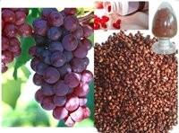 خواص بی نظیر عصاره هسته انگور را بدانید