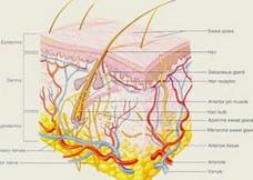 دانستنی پزشکی در مورد علل ریزش مو