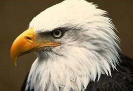 خصوصیان منحصر به فرد دو نژاد محبوب عقاب