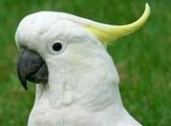 بیماری پرندگان می تواند مشکلات جدی را برای آنها به وجود آورد
