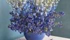 نکات درباره نگهداری صحیح از گل ها در بهار