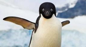 علت علمی پرواز نکردن پنگوئن ها