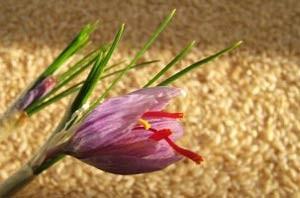 زعفران دارای یکی از فاکتورهای کلیدی