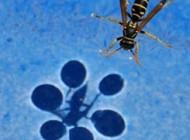 کشف راه رفتن و ایستادن حشرات روی آب