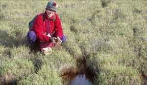 گیاهانی که قرن ها زیر یخ مدفون بوده اند بیدار شدند