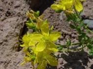 درمان بیماری صرع با عرقیات و گیاهان