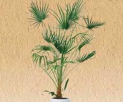 گیاهان تصفیه گر را میشناسید؟