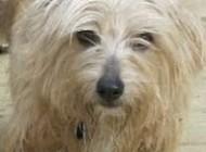 شرح ضرب المثل سگ در خانه اش تازی می شود