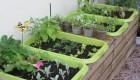 تهیه و پرورش سبزی خانگی مرغوب