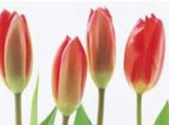 زمان اصلی گلدهی گیاهان چه وقت است؟