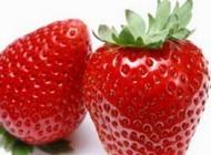 اینگونه توت فرنگی را در گلدان پرورش دهید